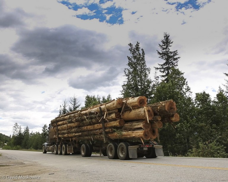 Log truck carrying old-growth cedar trees out of caribou country.