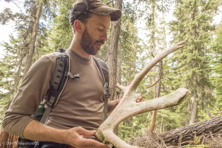 Marcus Reynerson inspecting a caribou antler he discovered in the old growth forest just uphill from the end of the road and the last clearcut in the valley.