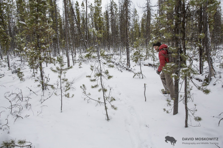 Marcus Reynerson following the trail of several caribou through fresh snow.