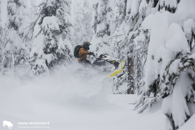 Ryan Dunford playing in the subalpine on a snowmobile in the Frisby Mountain, just west of Revelstoke.