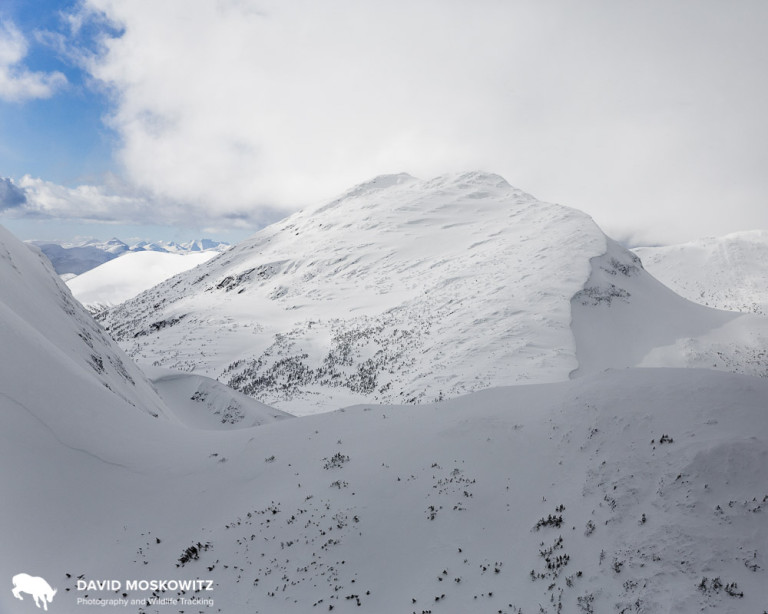 Winter mountain caribou habitat in the Hart Range, BC. Photo by David Moskowitz.