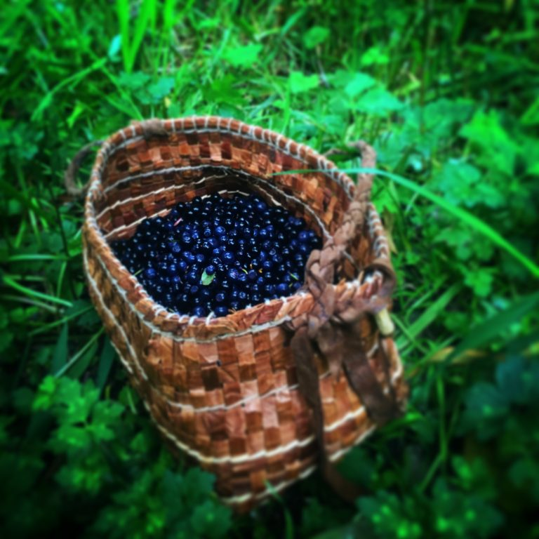 A cedar bark basket made by Kim Shelton filled with huckleberries. Photo by Kim Shelton.