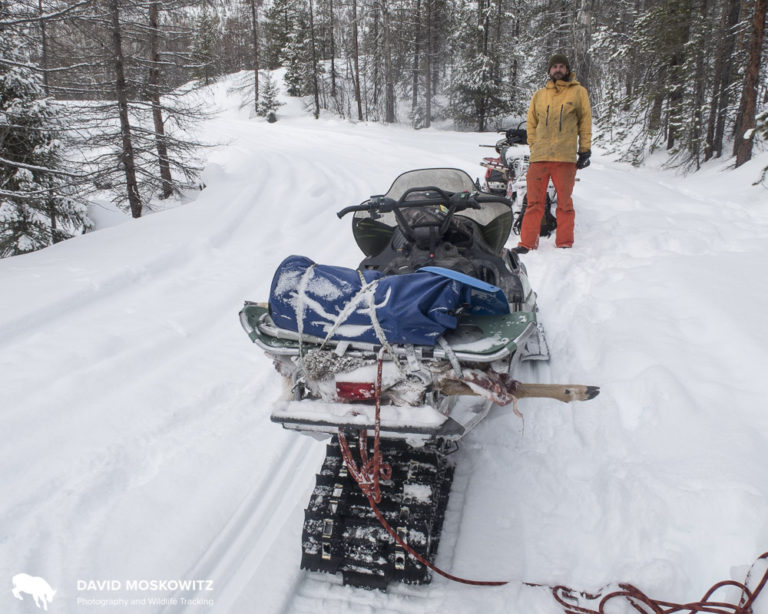 Anything unusual about this snowmobile packing job? Researchers in Idaho and Montana are using beaver carcasses or deer legs as attractants to lure rare carnivores like Canada lynx and wolverines to bait stations set up with hair snagging devises to collect genetic samples from animals without ever having to see or handle the animals. I've been hitching a ride out into the field with researchers and setting up my camera traps adjacent to their bait stations.
