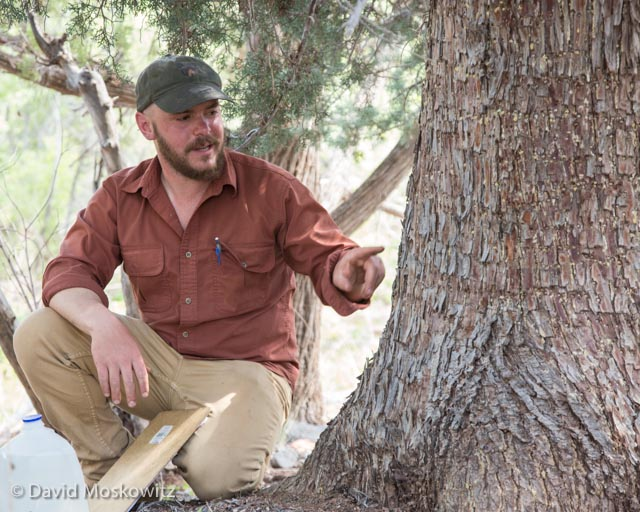 Local expert Matt Monjello, seen here discussing sapsucker feeding sign left on a juniper tree, organized and assisted with the evaluation.