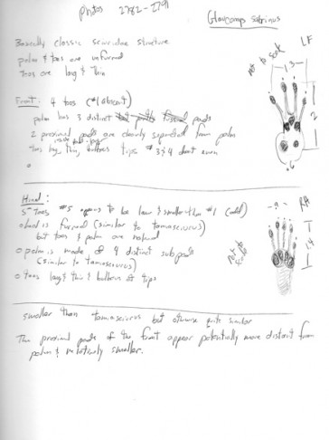 Original notes and sketches from my book research on the species from 2009.