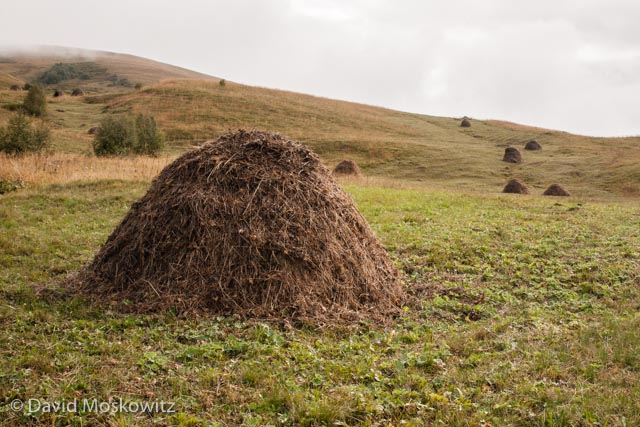 Often, hay is carefully collected into mounds which are left to dry before being hauled back to the village and stored for the winter.
