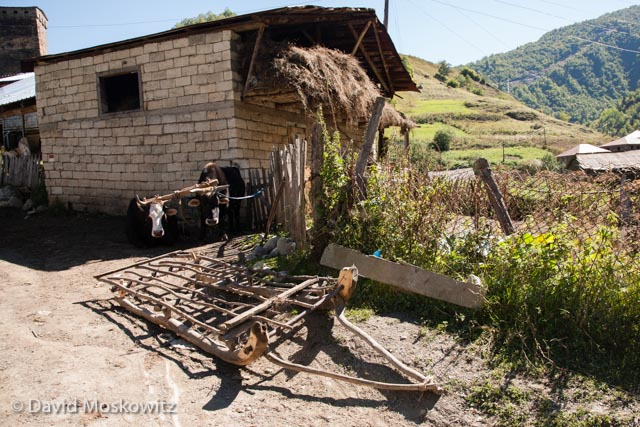 A wooden hay sled sits in front of a modern barn built with a traditional design, while two cows rigged for hauling it rest in the shade. Hay is stored in the top while livestock are penned below during the winter. Sveneti, Republic of Georgia.