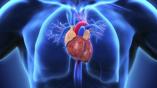 Hypertrophic-Cardiomyopathy_STACK.jpg