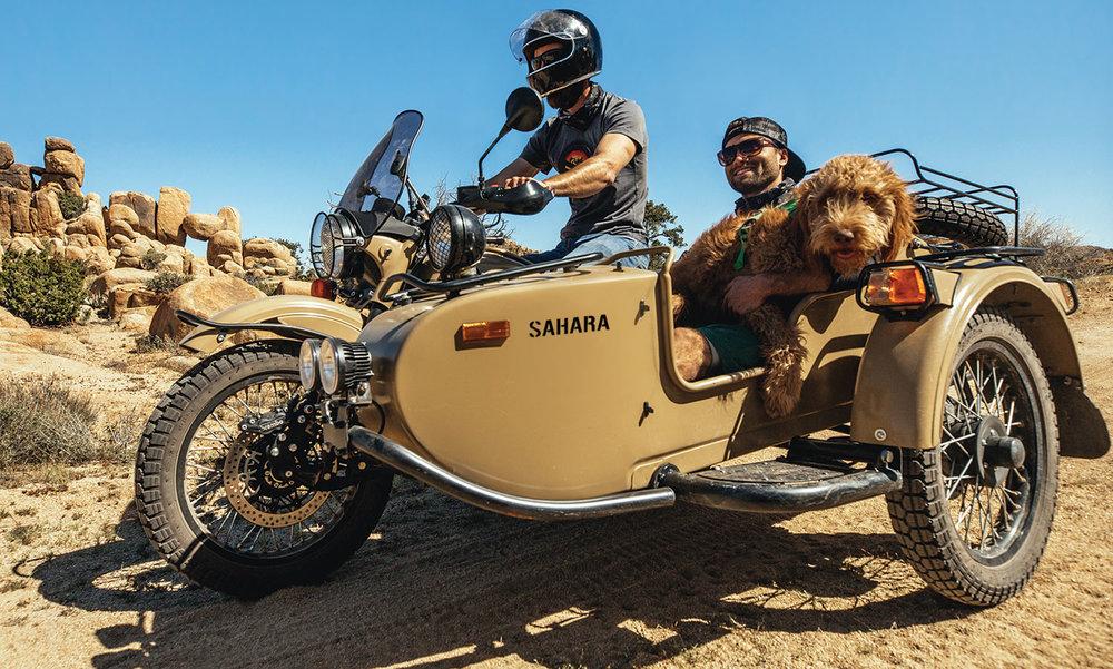 sahara-dog-aus.jpg