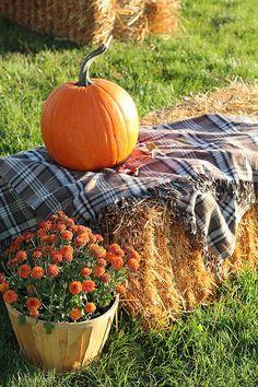 Fallharvest.jpg