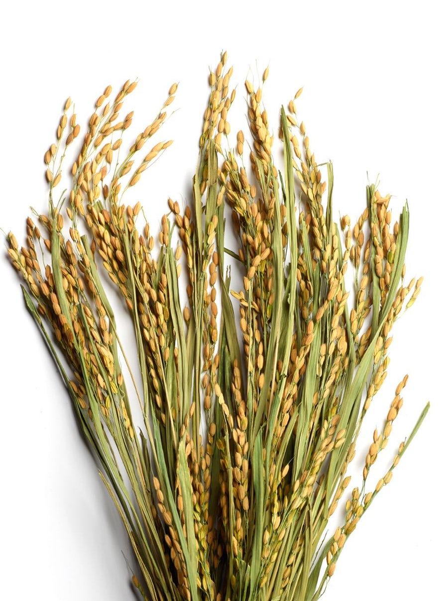 Countermatch Adaptive Moisture Lotion wheat.jpg