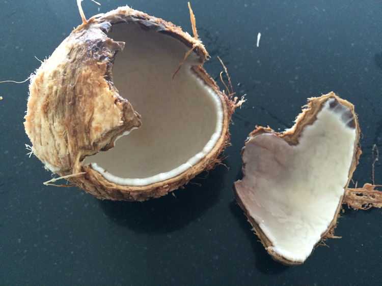 Cracking_Open_a_Coconut_Shell.jpg