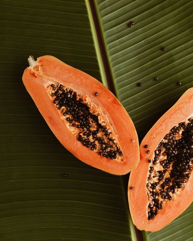 #Papaya came to India in the 1550s through the Caribbean, and now, in 2018, India is the largest producer of the crop. What will exploration bring today? . . . #plant #india #leaf #explore