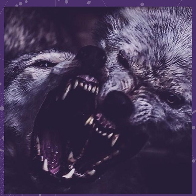 Innerctrl 18 Year: #trends2018 Details: #purple #moodboard #wolf  Thank you: #erratico #trend @eric.camp 💜 @holyhowl