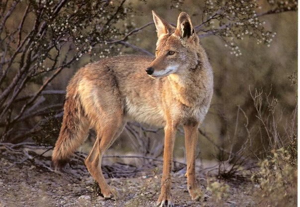 Wildlife & Beautification -