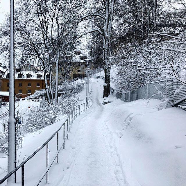 A last snowy stroll in Stockholm before leaving. . . . #stockholm #stockholmsweden #sweden #sverige #scandinaviancity #snö #snow #trees #park #observatorielunden #vasastan #stroll