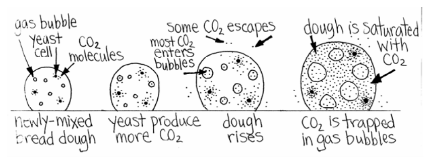 Yeast don't create the air bubbles in bread (from Bread Science).