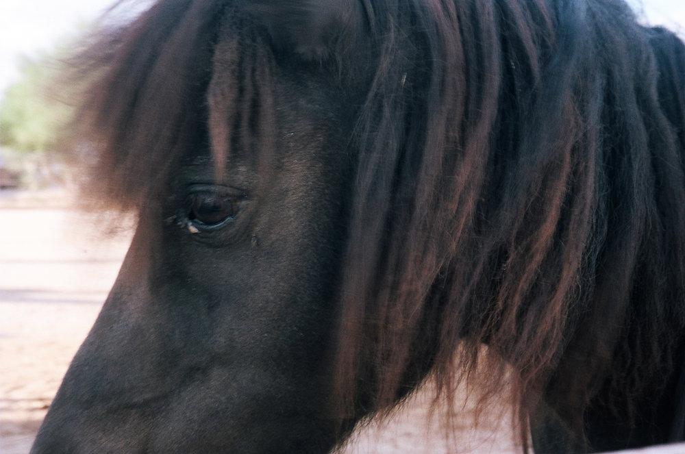 ©roeg_cohen_Lolas_Arz_horses_1-2014.jpg