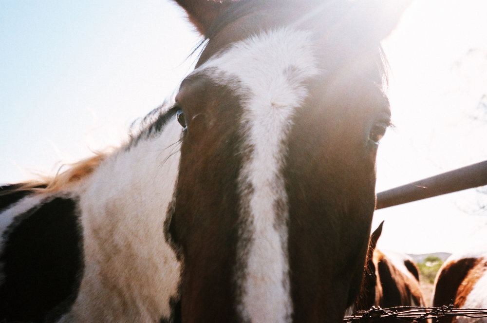 Alpine_Texas_paint_horse-10.jpg