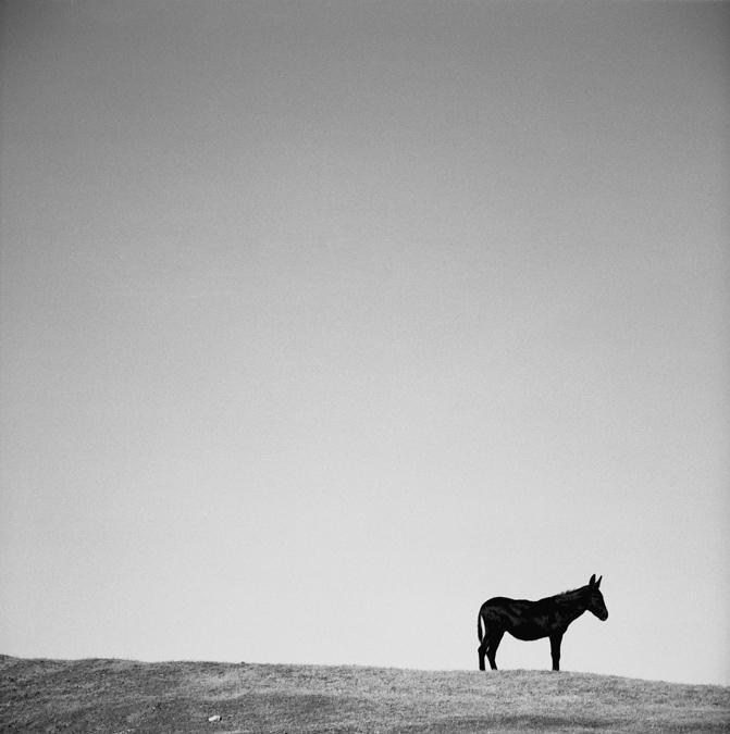 Mule_print.jpg