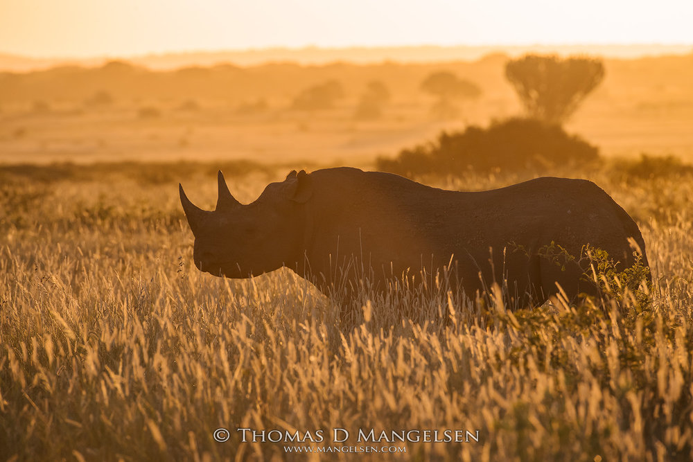 mangelsen_saving_the_wild_rhino_04 (3).jpg
