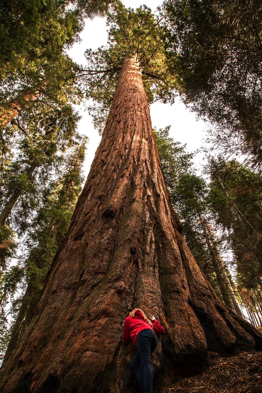 lilsequoia.jpg