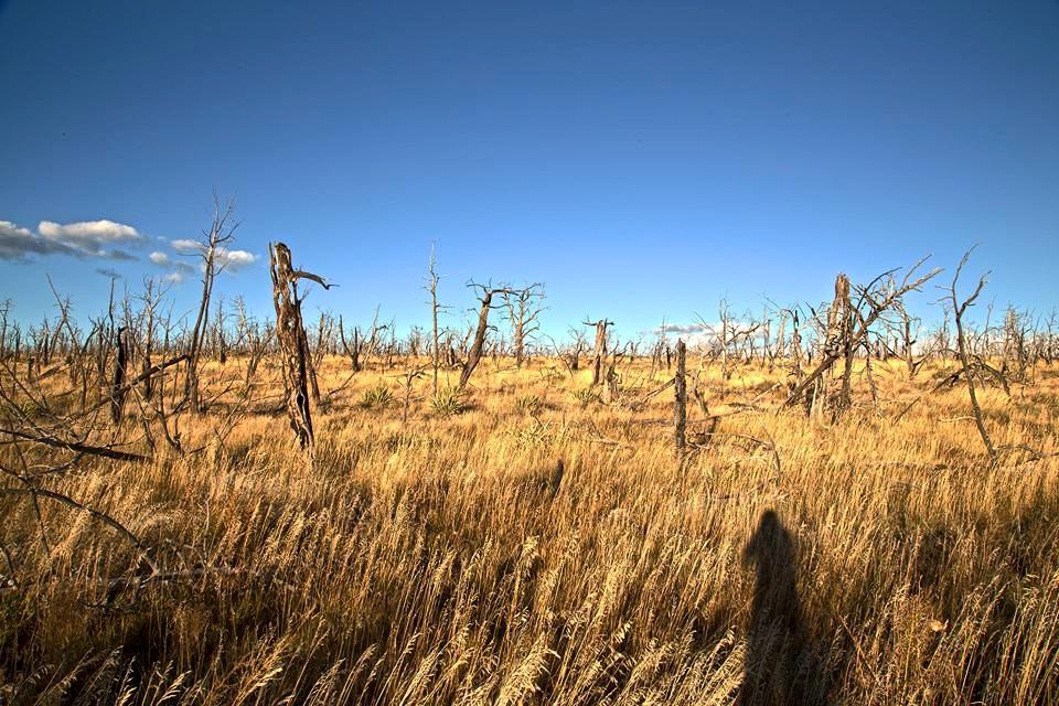 Bizarre landscape at Mesa Verde National Park.