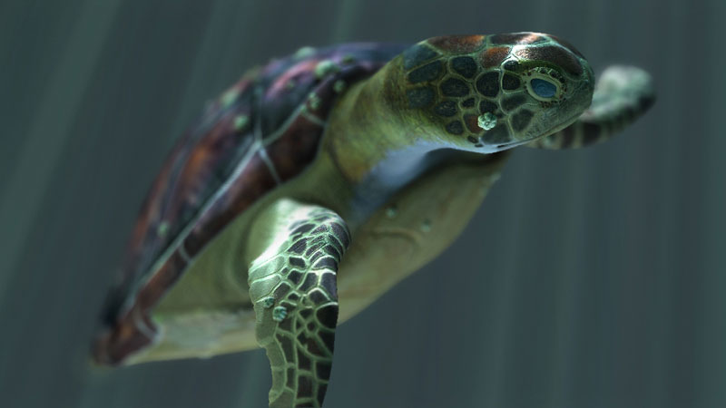 turtle0.jpg