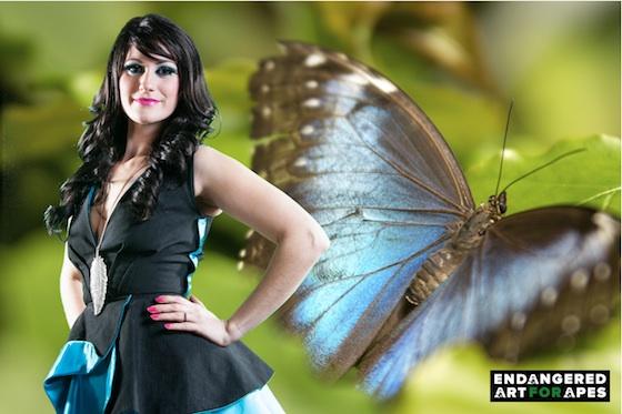 Blue-Morpho-Butterfly.jpeg