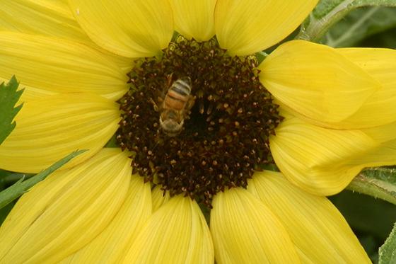 ID405276-Bee-Line-Joseph-Perez.jpg