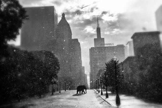 ID412652-Escape-in-the-Rain-Matthew-Coglianese.jpg