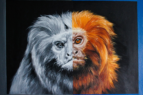 ID419752-Golden-Lion-Tamarin-Sarah-Smith.jpg