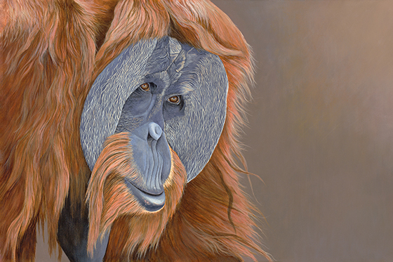 ID426176-Orangutan-Edward-Takacs.jpg