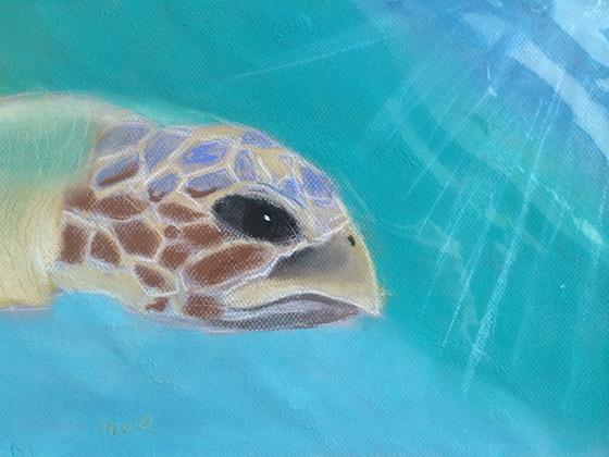 ID426257-Sea-Turtle-in-the-Sunlight-Mia-Gifford.jpg