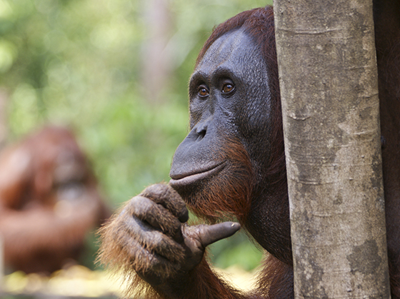 ID426348-The-Thinker-Brian-Kamprath.jpg