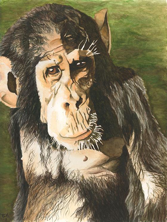 ID426723-Kathé-Chimpanzee-Thurston-C-Hicks_NEW.jpg