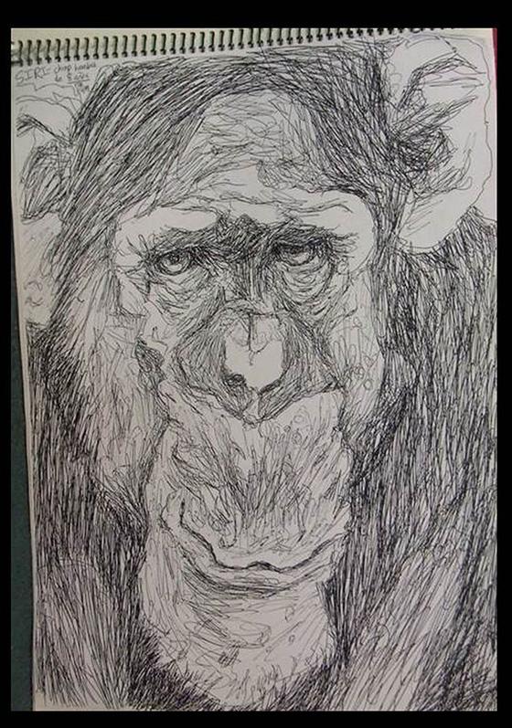 WEB_FA_ID475403-Siri-Chimpanzee-Thurston-C-Hicks.jpg