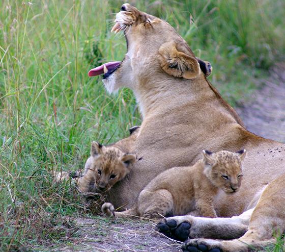 WEB_P_ID475014-Motherhood-Katherine-M-Turpenoff.jpg