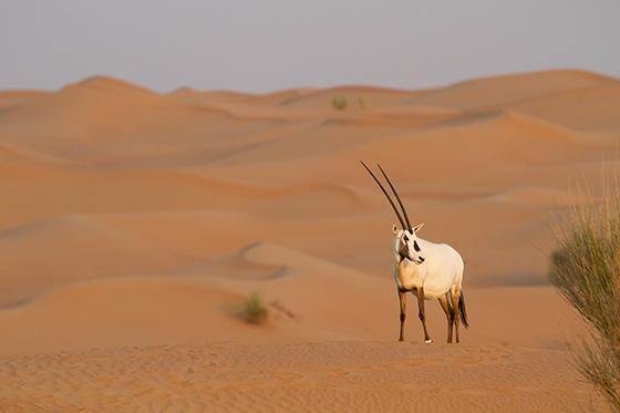 WEB_P_ID475070-Sunrise-on-the-Desert-Kirsten-Hines.jpg