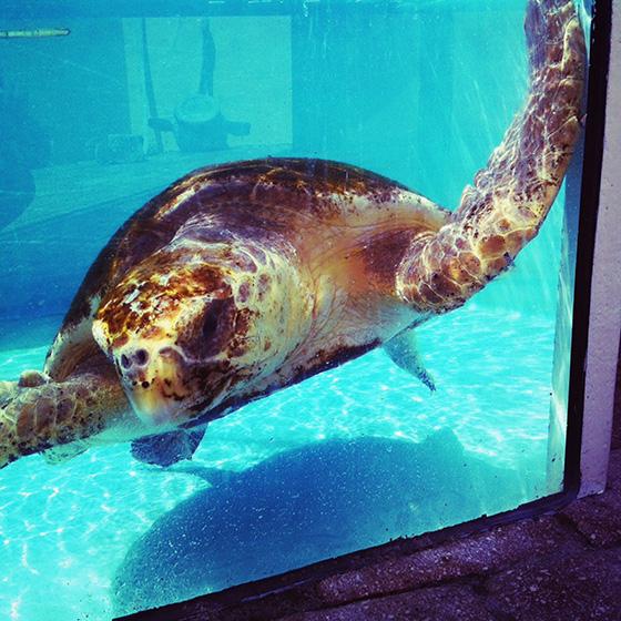 WEB_YA_ID475031-Turtle-Rescue-Scout-Dingman.jpg