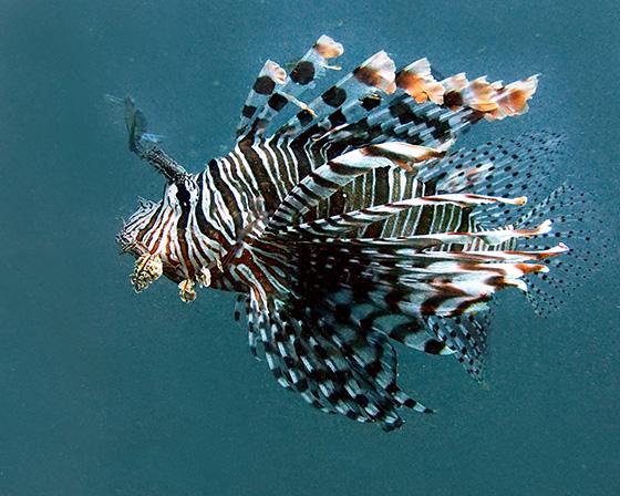 WEB_P_ID475461-Exotic-Predator-Jane-L-Saull.jpg