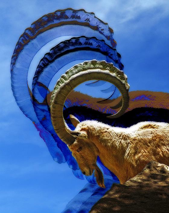 WEB_FA_ID506986-Horns-of-the-Dilemma-Beth-Rosengard.jpg
