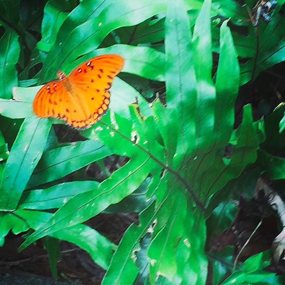 WEB_YA_ID511920-Butterfly-Scout-Dingman.jpg