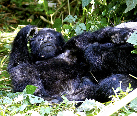 WEB_P_ID520291-Relaxing-in-Rwanda-David-Loss.jpg