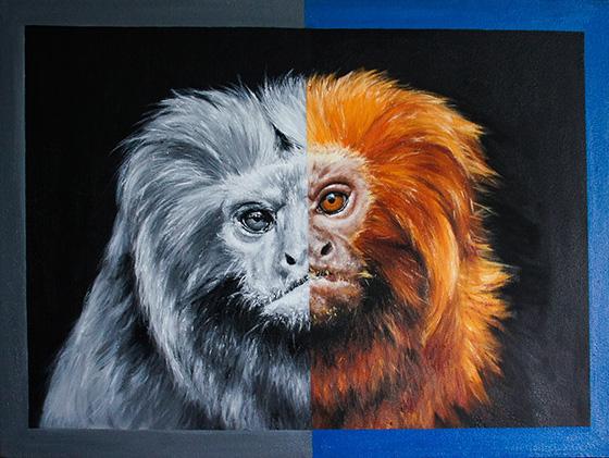 WEB_FA_ID520410-Golden-Lion-Tamarin-Sarah-Smith.jpg