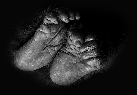 WEB_P_ID520544-Baby-Feet-Prelena-Soma-Owen.jpg