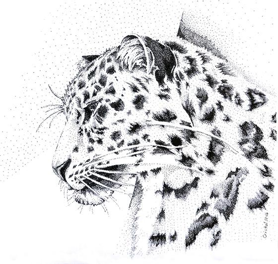 WEB_FA_ID520697-Amur-Leopard-Cristal-Baldwin.jpg