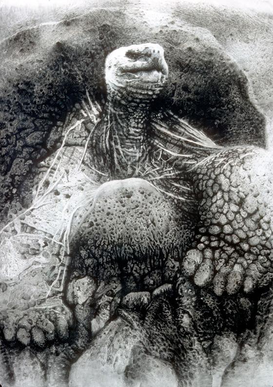 WEB_FA_ID520794-Galapagos-Tortoise-Janet-Culbertson.jpg