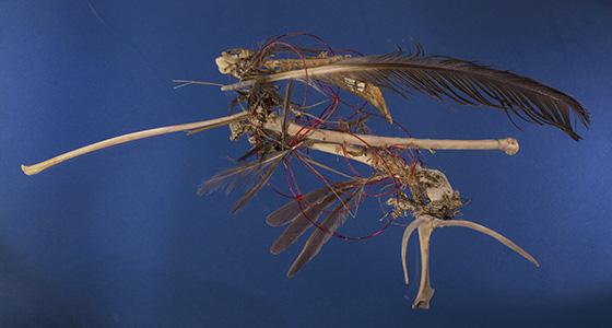 WEB_P_ID520699-Bird-on-a-Wire-Robert-Simmons.jpg
