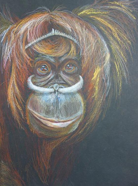 WEB_YA_ID520574-Orangutan-of-a-West-Papua-New-Guinea-tribe-Karson-Schenk.jpg
